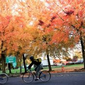 Fall colors by bike in Portland