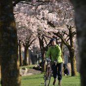 Friday Photos: Cherry blossoms on the Waterfront
