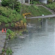High Water on the Willamette: Photos, updates on bikeway impacts