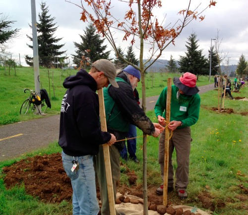 Friends Family Tree: Friends, Family Plant Trees Along I-205 Path In Honor Of