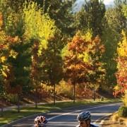 Oregon's Scenic Bikeways make it big with NYC Times Square ad