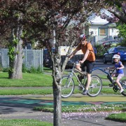Sharrows, sparrows and a roadway revolution