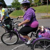 Ask BikePortland: What's the best way to carry a dog on my bike?