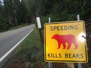 speedingkillsbears-1