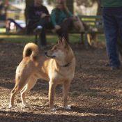 Comment of the Week: Bike trail advocates should take a lesson from dog parks