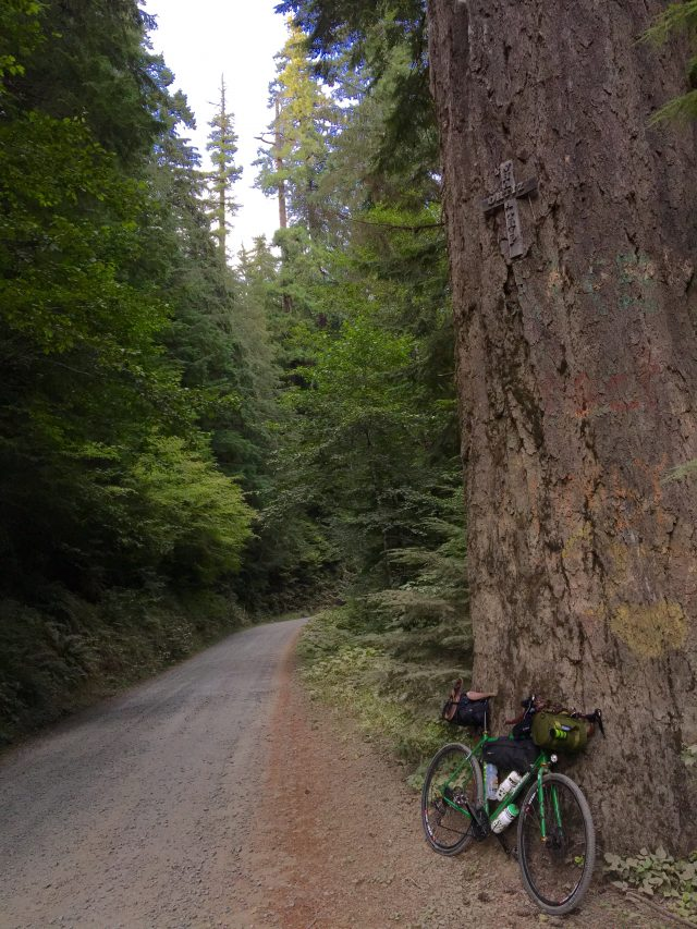 Gravel and big tree