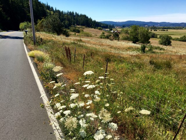 Lampa Lane west of Myrtle Point is your ticket to soak in the beautiful Coquille River Valley.
