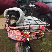 Biking with the family dog