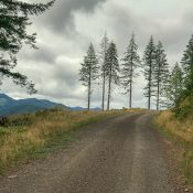 A taste of 'Gravel' in the Tillamook State Forest