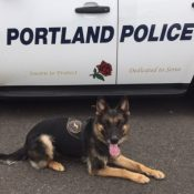Portland Police deploy canine, air support units to chase down bike thief
