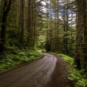 Unpaved road fans raise red flag over Clackamas County forest project