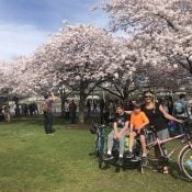 Family Biking: Here's how to bike to the cherry trees in Waterfront Park
