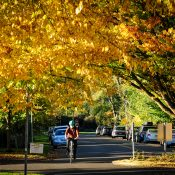 Portland's fantastic fall colors are a respite in anxious times