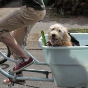 Dogs on bikes! Reader stories, photos, and my journey with my dalmatian Amélie
